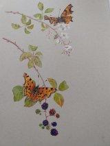 Brambles & Butterflies