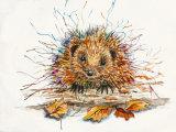 Harvey Hedgehog