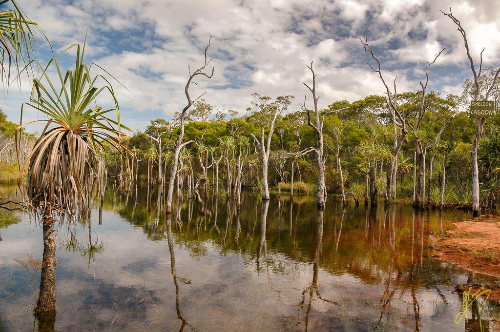 Sheldon Lagoon, Cape York, Queensland.