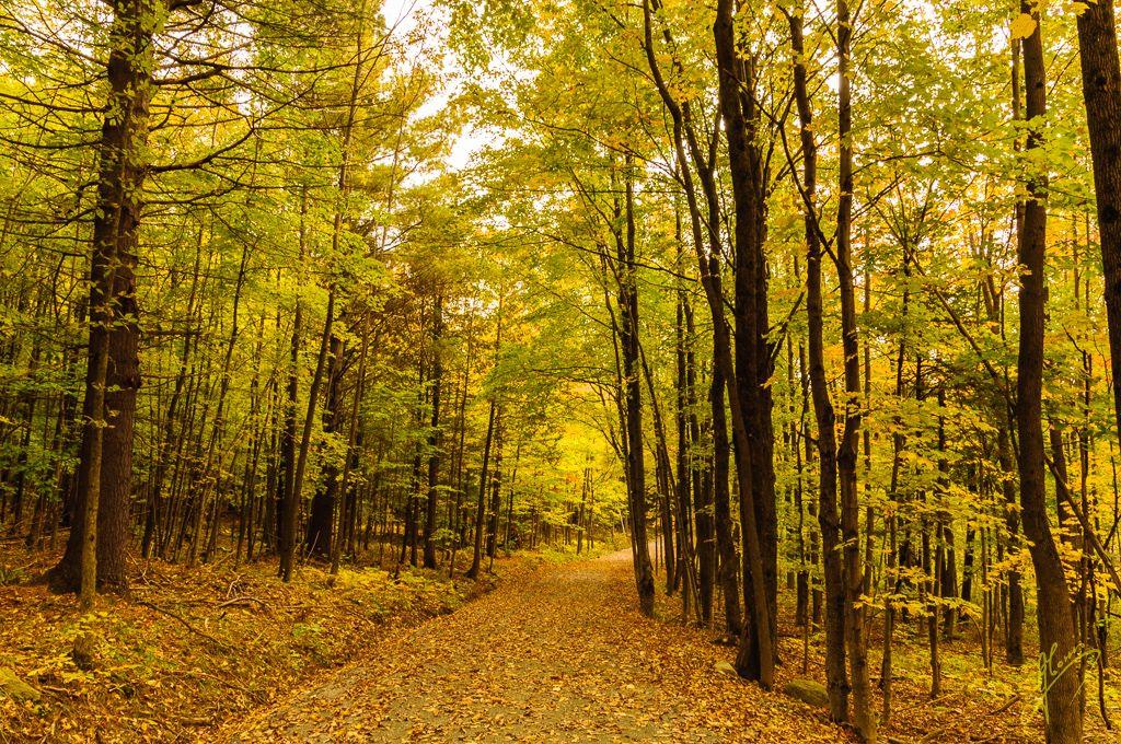 Boucle des Trois-Ètangs Trail, Parc national du Mont-Orford, Quebec.