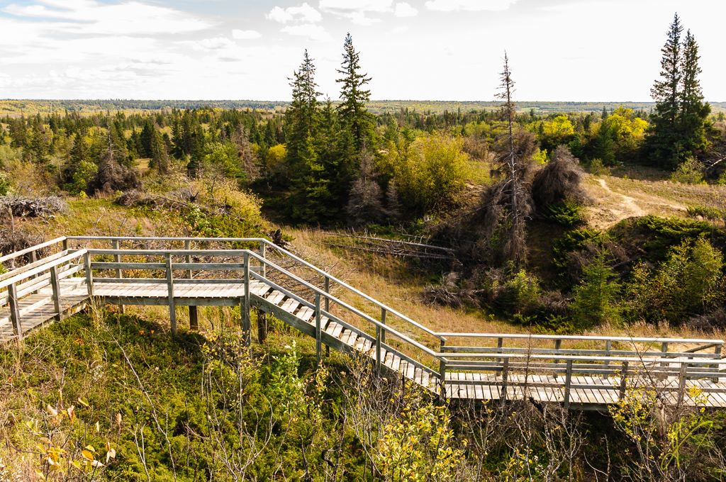 Spruce Woods Provincial Park, Manitoba.