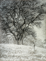 Oak Tree in a Snow Storm