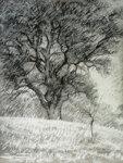 Oak Tree in a Snow Storm