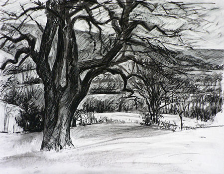 Tree in the Valley. Drawing.