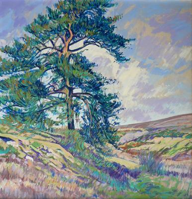 Pine on Lastingham Moor