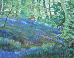 The Bluebell Wood.