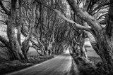 1st Nigel Byrom Trees The Dark Hedges