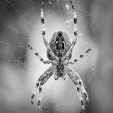 1st Nigel Byrom  Close up Spider