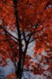 3rd A Le Conte Predominant Colour Red Leaves