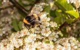 Berni Kerrigan Spirit of Summer summer bee