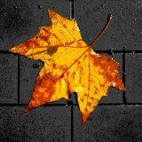 Brian Johnson Creative Techniques Autumnal