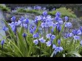 DaveLeP Predominant Colour Bluebells edited-2