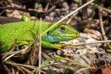 Derek Bridel AFIAP BPE2 Gillingham Green Lizard Habitat