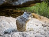 Derek Bridel AFIAP BPE2 Nature Rock Squirrel