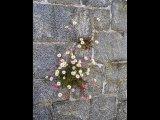Derek TostevinAPAGB BPE1  Gillingham  St Peter Por Daisy