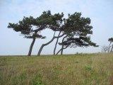 Derek Tostevin Gillingham Lislet trees