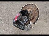 Derek Tostevin Gillingham Turkey display