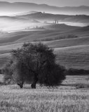 Godfray Guilbert Annual Championship Mono Open-Overall Print Tuscan tree and hills