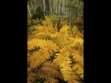Godfray Guilbert Predominant colour Autumn fern