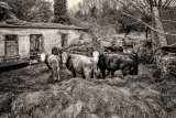 Honours MO Nigel Byrom Animal Farm