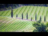 Jo Mahy  Landscape Chianti landscape