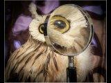 Martyn Elliston Close up Eye Spy