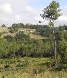Robin Millard Landscape Perigord Landscape