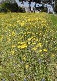 Robin Millard Predominant Colour Wild Yellow