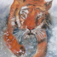 Splashing Tiger - £20