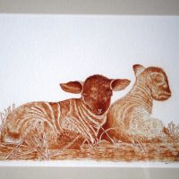 Sams Lambs