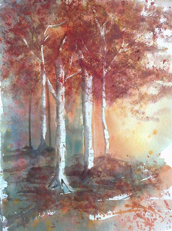 Silver Birch in Autumn £15