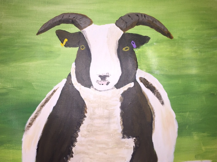 Wild-eyed Jacob sheep