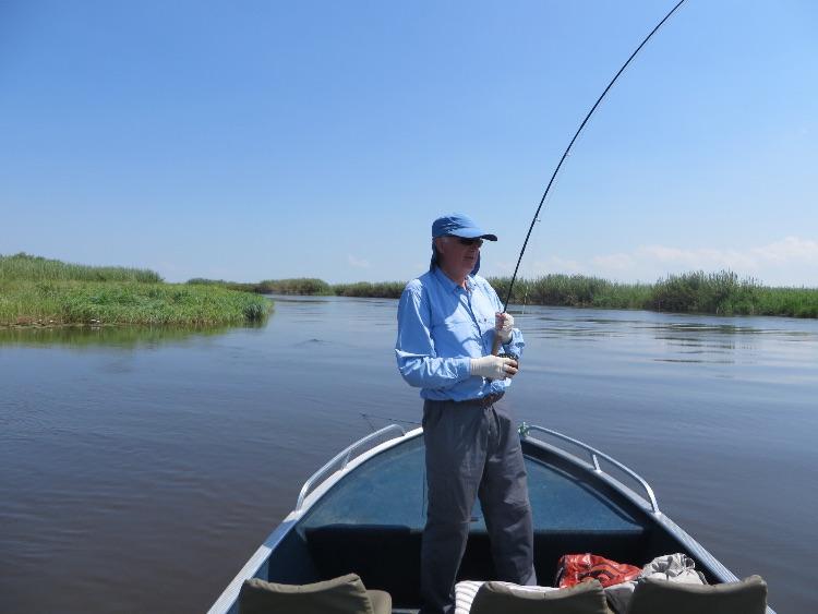 Into a tiger fish on the Kasai Channel,  Zambezi