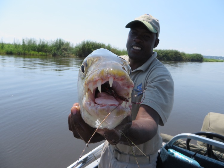 Aaron holding a tiger fish