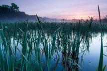Emelaar Wetlands