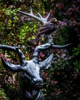 blackbird & the stag
