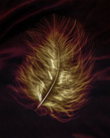 feather on silk