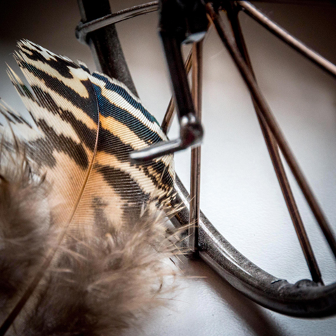feather & bike