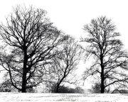 desolate trees