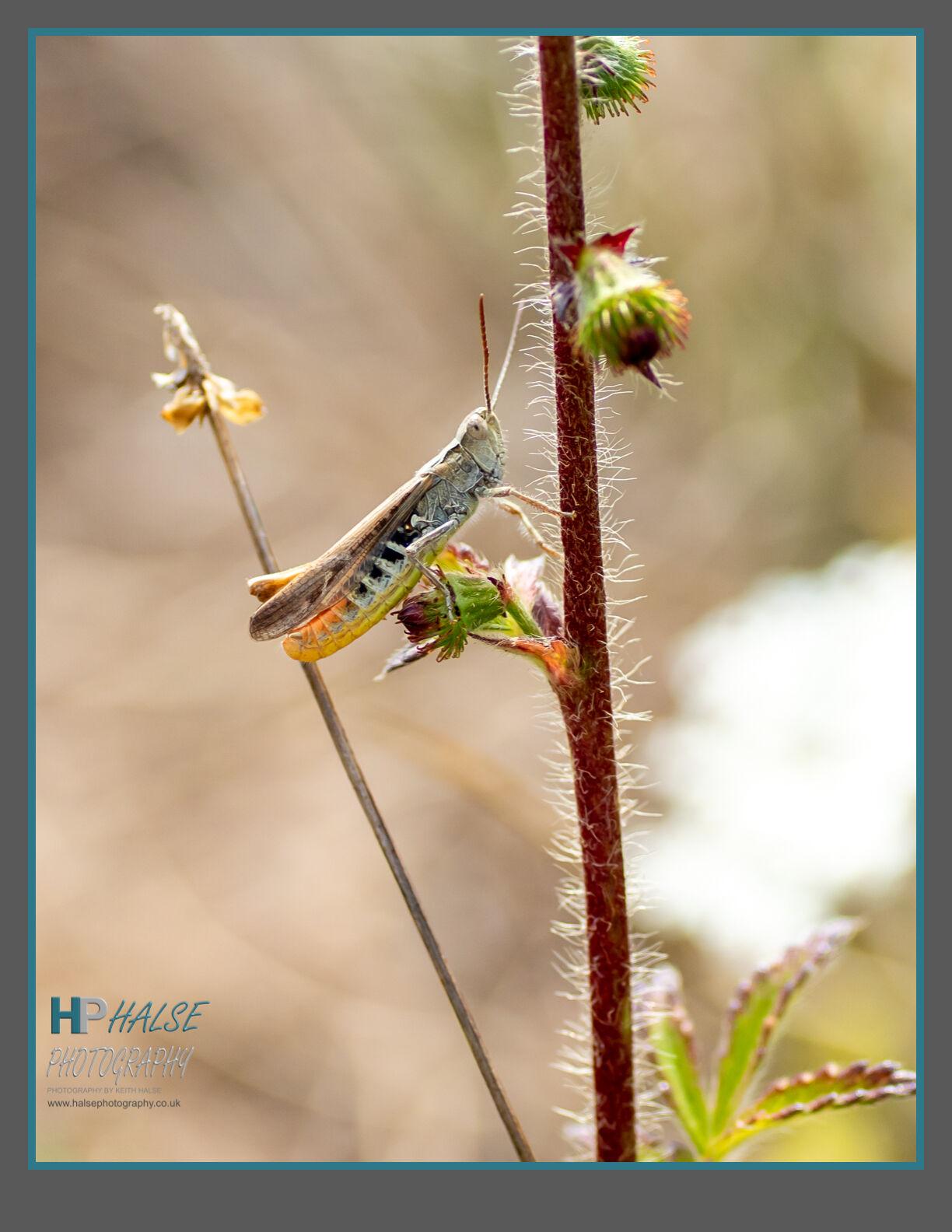 014 Grasshopper