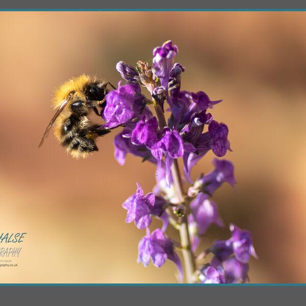 013 Bee Gathering Pollen