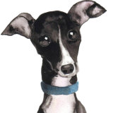 ITALIAN GREYHOUND ital101