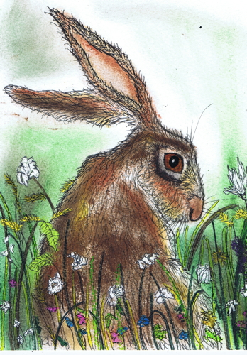 BROWN HARE IN FLOWERS h2567
