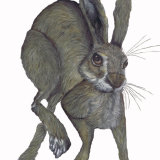 HARE IN A HURRY! h3315