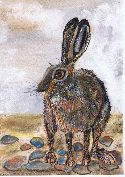 BROWN HARE - h3012