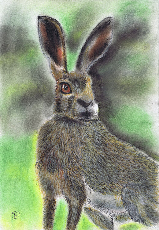 BROWN HARE h2028