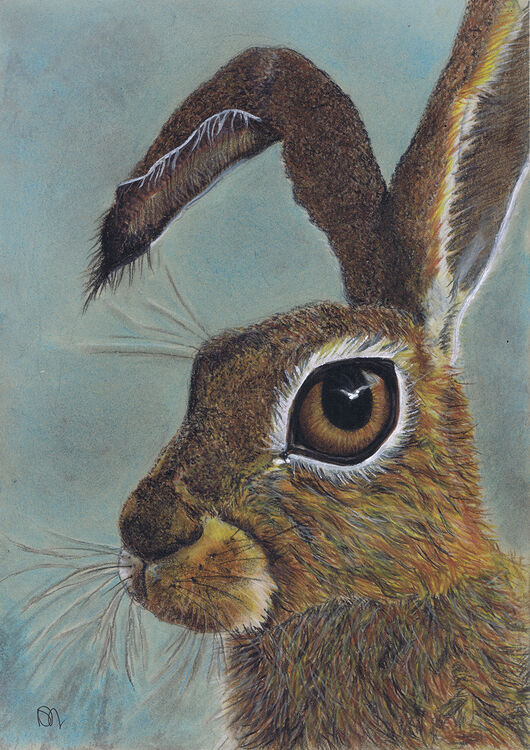 BROWN HARE h4021