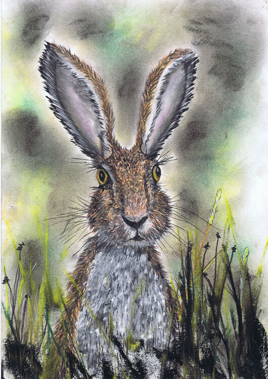 HARE IN GRASS h3206