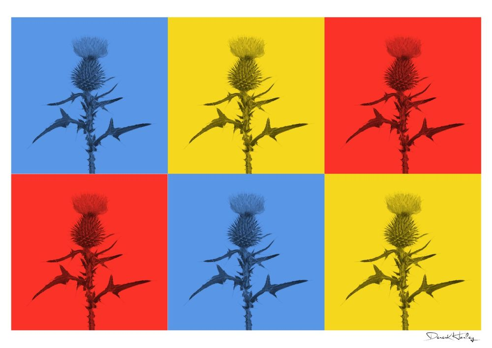 Warhol Style Scottish Thistle