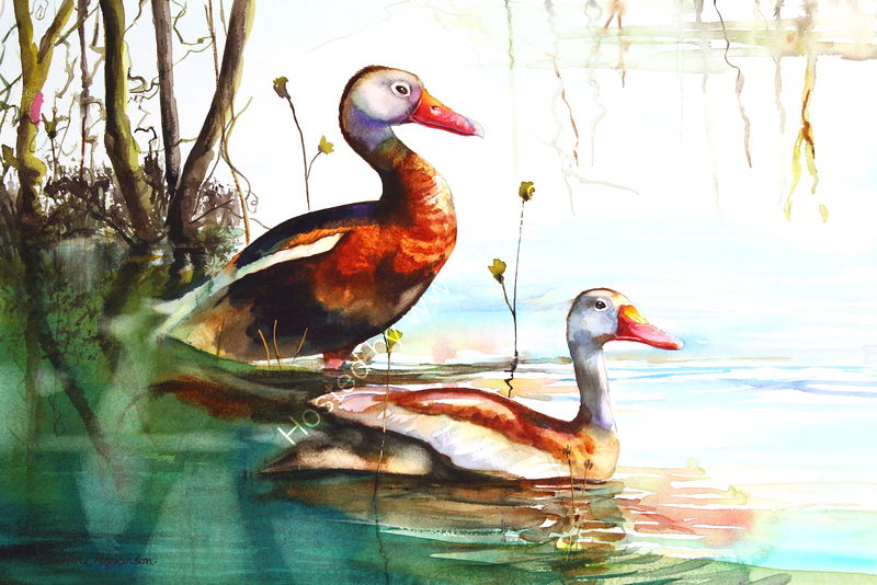 "'Black Bellied Whistling Ducks Myakka Florida' watercolour, unframed dimensions 14""x21"""
